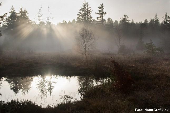 Forårsmorgener med tåge og dis skaber spændende stemninger.