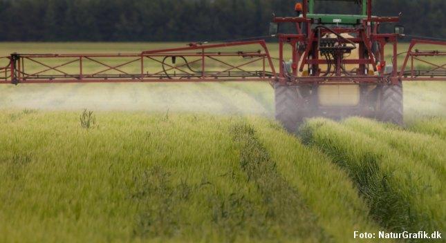 En dansk mark sprøjtes med gift. Forskere anbefaler nu, at gravide spiser økologisk, og at børn får serveret økologisk mad.