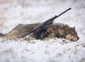 Danske ulve forsvinder