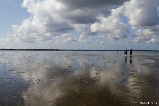 """Vadehavet er blevet mere populært blandt turister efter at have fået titel af """"verdensarv""""."""