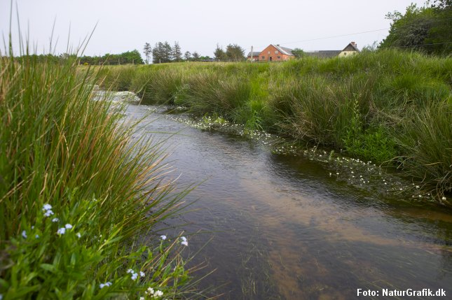 Landbruget ønsker en hårdere oprensning af vandløbene ved at fjerne vandplanter og sten i vandløbene, der bremser vandets hastighed.