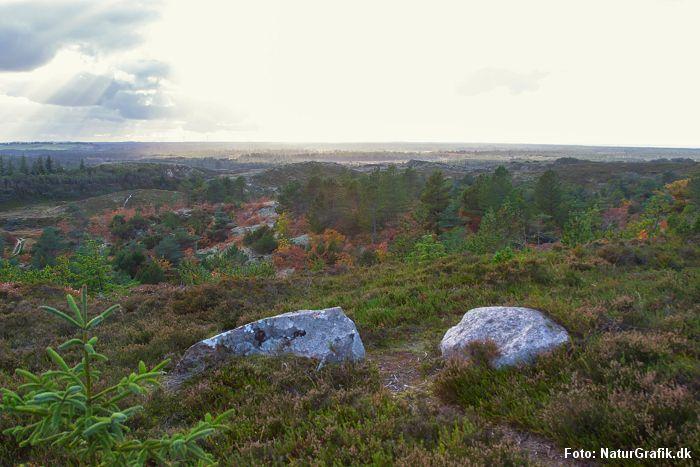 NaturGuide.dk tester vandresokker fra Danish Endurance. Klitheden langs Jammerbugten er et godt udgangspunkt for en god vandretur