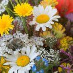 Grøftekantens vilde blomster